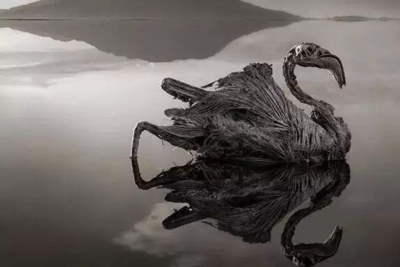 世界最诡异湖泊:动物进去就变干尸!