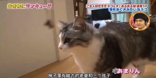 环游日本的猫咪喵吉的日常
