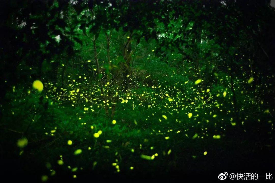 这么多梦幻如仙境的萤火虫旅行地 你居然都不知道?