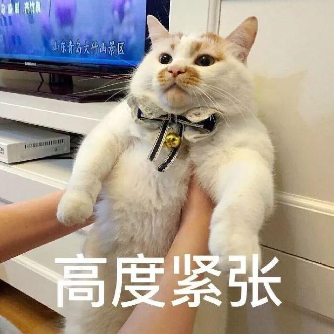 壁纸 动物 狗 狗狗 猫 猫咪 小猫 桌面 675_675