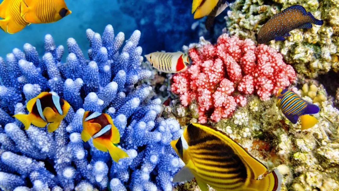 一 它为藻类植物提供住所, 藻类也在其他方面回报它们.图片