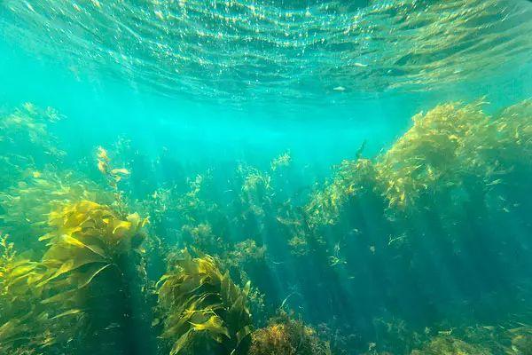海洋里的植物神秘有趣,可以吃的竟然还有这么多!图片