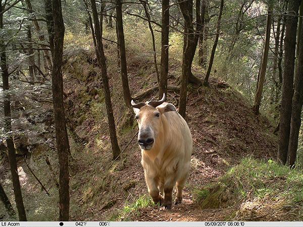 """野生动物如何""""荒野求生""""?自然保护区红外相机摄影作品"""