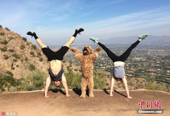 2015年6月24日报道(具体拍摄时间不详),来自美国芝加哥的一对狂热健身夫妇将他们与爱狗一起健身的搞笑视频PO到脸书,吸引了200万人浏览。Mike和Lex Sawtelle以Jacked and Jill的网名为大众所熟知。一月份他们开始在Instagram上传15秒的健身视频,之后他们的视频在脸书上一夜爆红,分享次数高达200万。图片来源:东方IC 版权作品 请勿转载