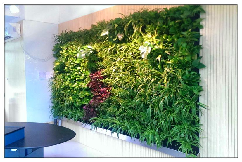 """神奇的""""植物墙"""":室内出现有害气体植物就会"""