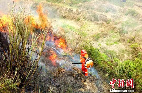 图为在山林中灭火。 吴苏梅 摄