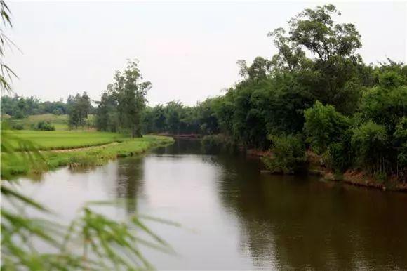 农村面源污染等突出问题,积极开展岸线管理,水污染防治,水环境生态