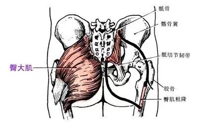 骨骼型ps平面设计