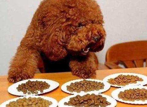 泰迪吃宝路狗粮好吗?_泰迪吃什么狗粮比较好_泰迪吃奥丁狗粮好不好