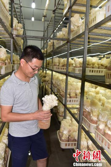 科技引领福建尤溪食用菌产业升级 助力农民脱贫致富