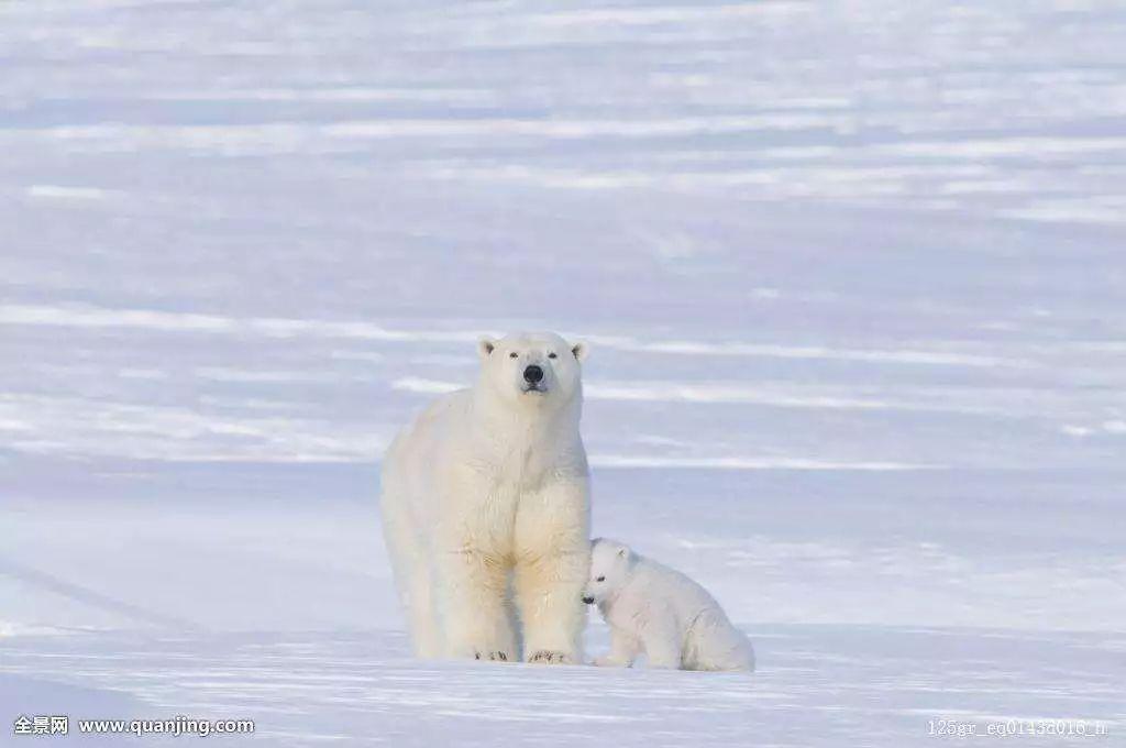 世界上最危险的动物,每年杀人72万,生活中却很常见!
