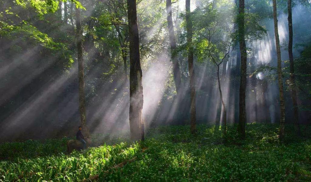 夏日避暑新去处!浙江这几个原始森林 媲美神农架图片