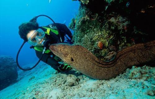 海底到底有多少未知的秘密?来看看海底10000米的样子吧!