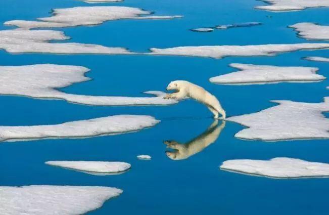 北极熊可能灭绝!北极圈罕见达到高温32℃,最该