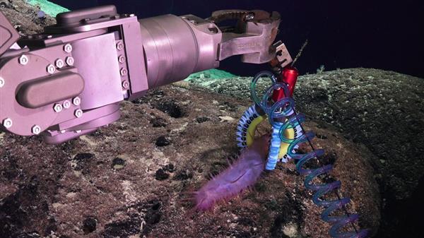 3D打印柔软机械手帮助科学家研究深海生物