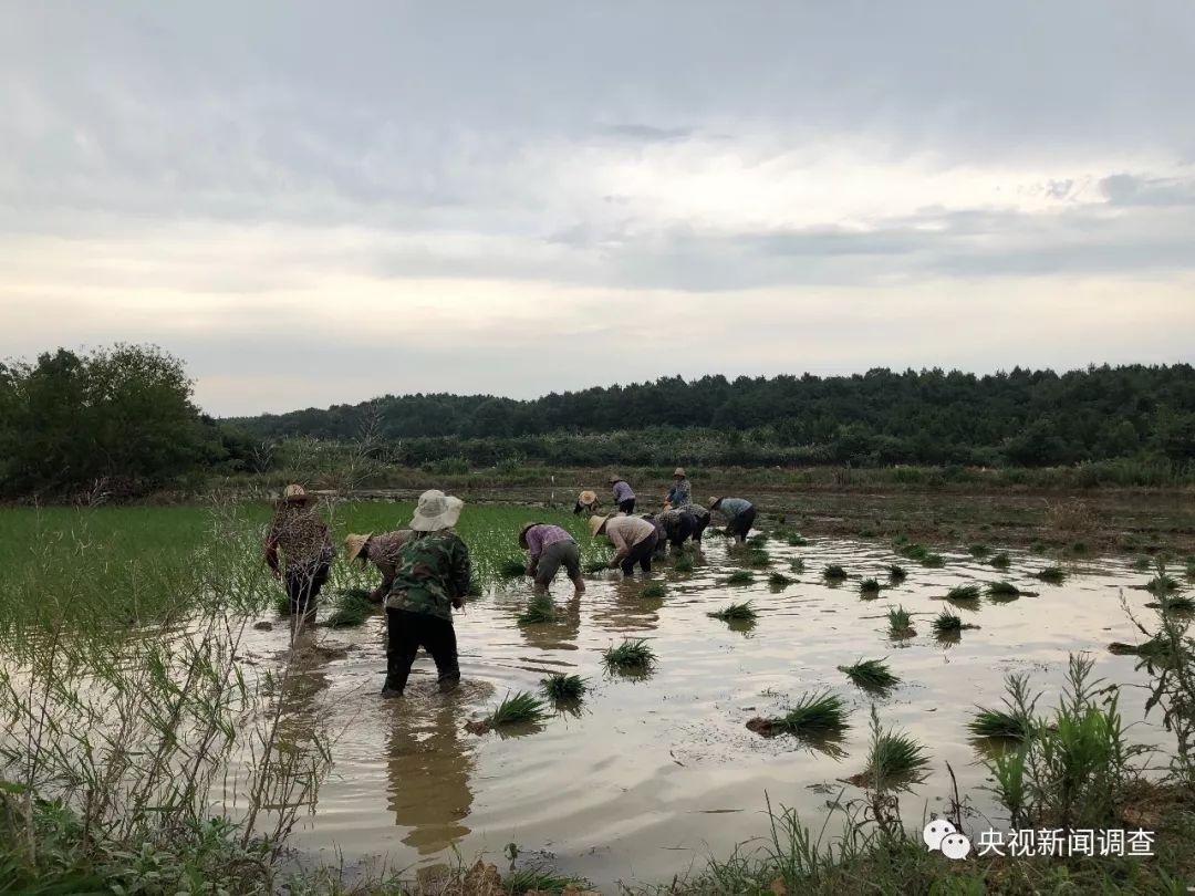 预告|乡村2018(二)——张远村的试验