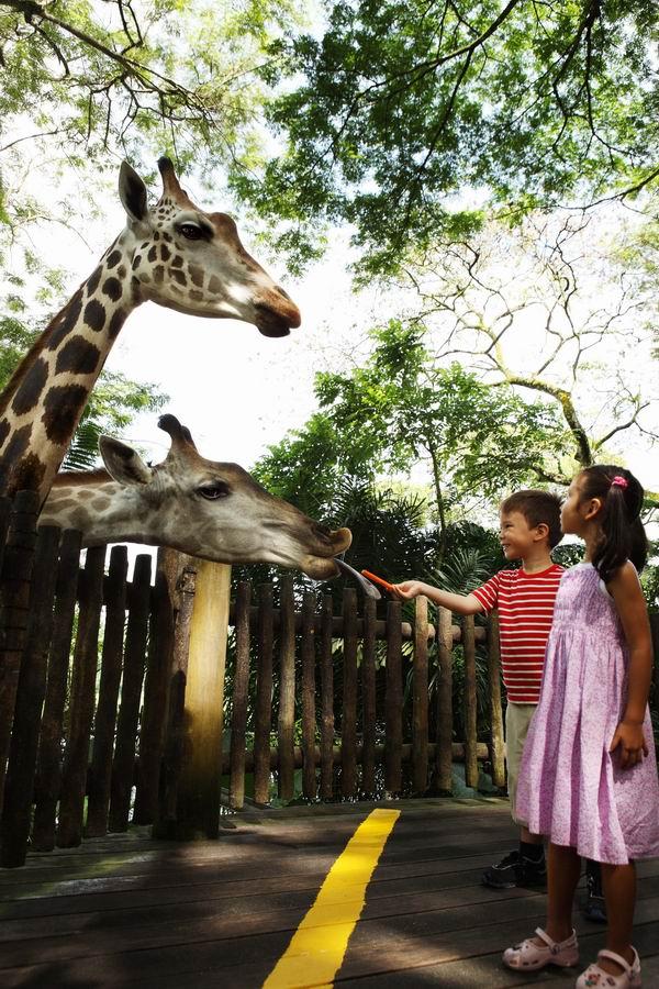 新加坡动物园深度游让你逛足两天