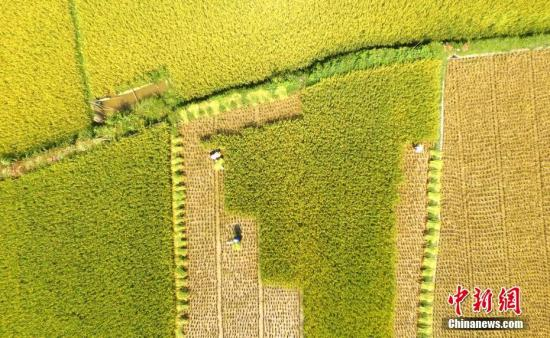 """首届""""中国农民丰收节""""主会场活动将于9月23日举办"""