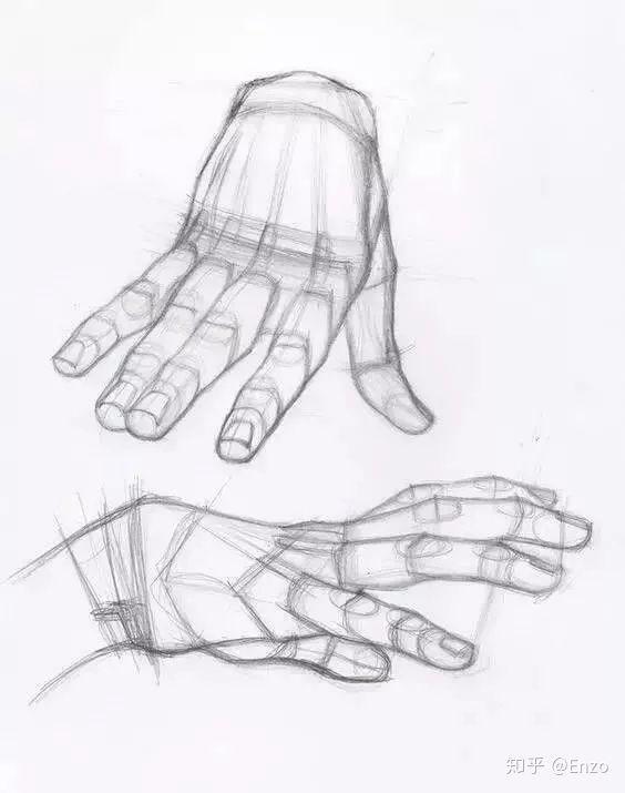可看出艺术家对结构了解很透彻 手部结构 手的结构复杂,表皮肌肉薄,少
