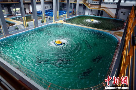 """""""中华鲟之家""""的展养池。 汤彦俊 摄"""