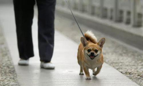 检察官观点:用异烟肼毒狗,到底有没有法律风险?
