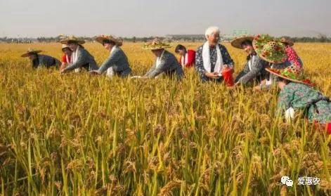 爱惠农 如何避免中国农民丰收节被淡忘?农业农村部回应