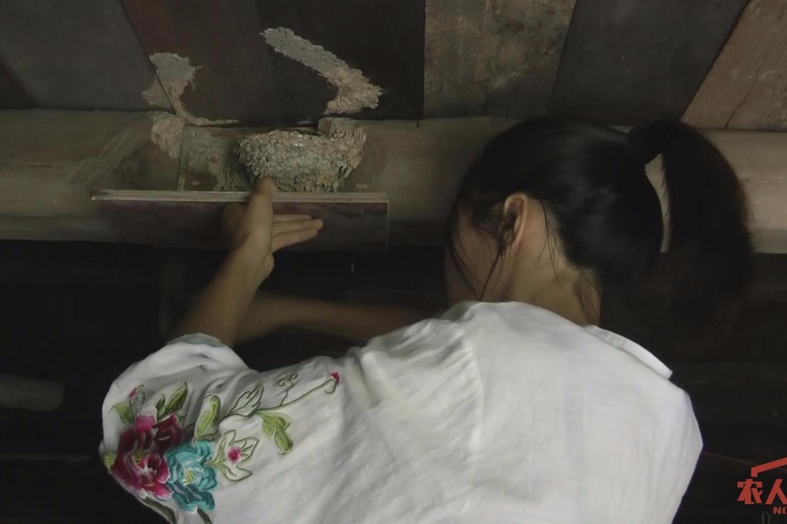 姑娘在燕子窝下面钉这么一块木板,既防粪便又防小燕子掉下,真好