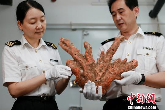 拱北海关移交红珊瑚等一批濒危动物制品