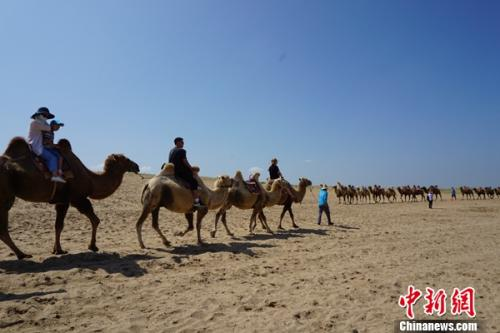 游人在沙湖景区的沙山上骑骆驼不悦目光。 姜雨薇 摄