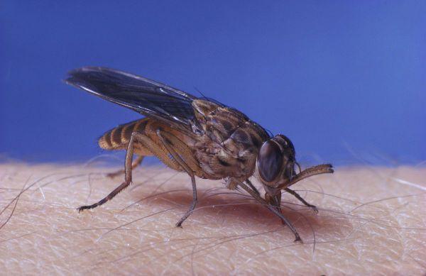 隐翅虫咬人后初步症状有什么?_咬螫伤_咬螫伤