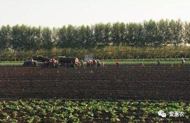 爱惠农|农业农村部给出答复,东北黑土地保护应该这么做
