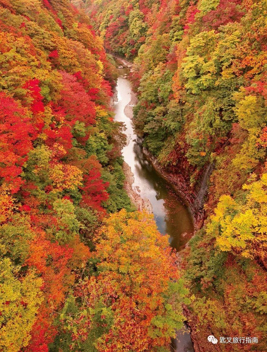 日本   一期一会红叶季 阴翳之美遇上缱绻秋意