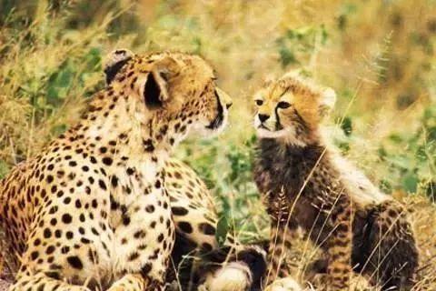 南通森林野生动物园位于港闸区北部,园区总占地面积3000余亩,计划总