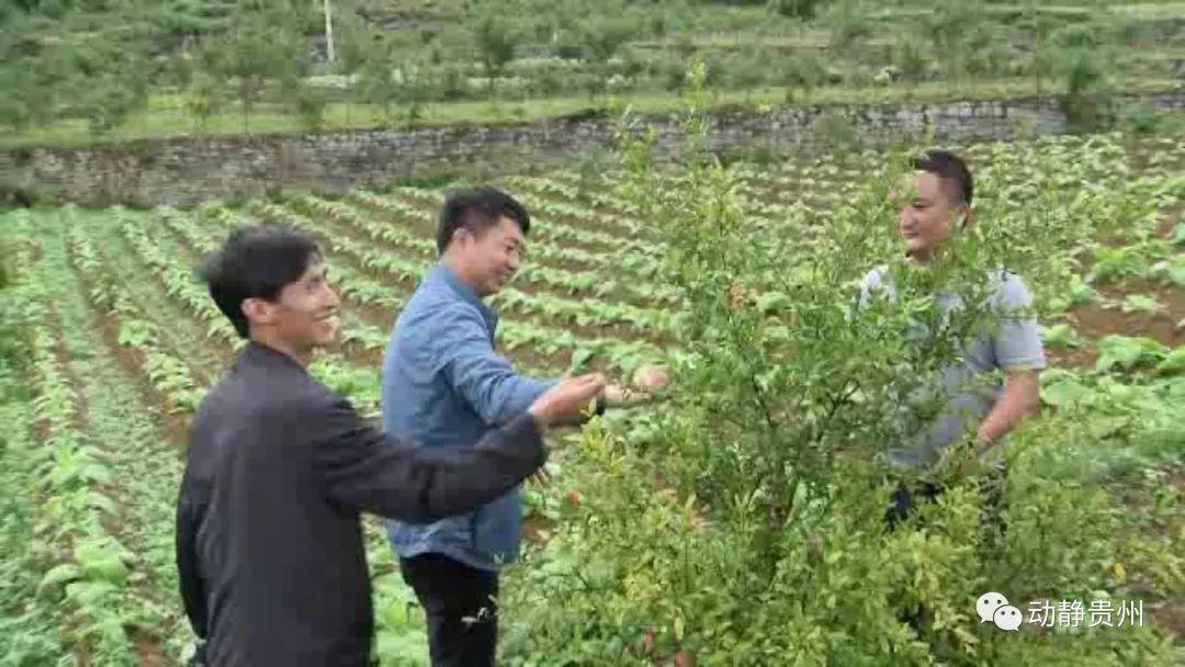 贵州这名驻村兄弟,带着干部去扶贫父亲2890加粉步奏图片