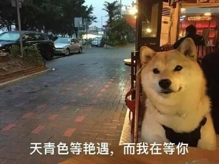 七夕单身狗专用表情包:一个狗的寂寞,两个狗的