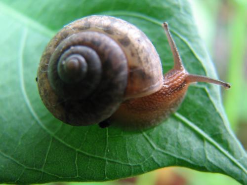 由于蜗牛特殊的身体结构和生活习性,普通的药剂很难对其造成致命打击.