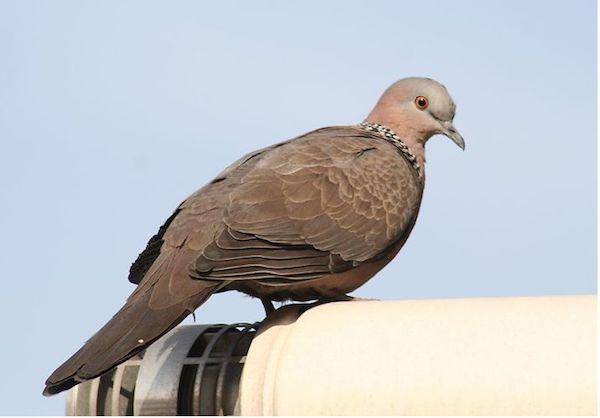 护士辞职创业养鸽,成当地养鸽大户,要将鸽子养殖集团化 3.jpeg