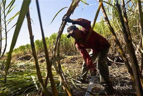 七旬老农创业种甘蔗,制红糖脱贫致富