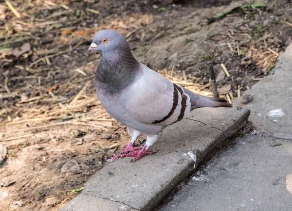 护士辞职创业养鸽,成当地养鸽大户,要将鸽子养殖集团化 1.jpeg