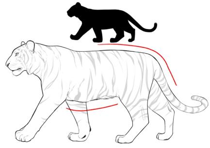教你画猫科动物,猫,老虎,狮子
