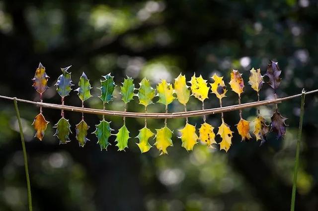 科普:大地艺术|从日本大地艺术祭看花艺可能性