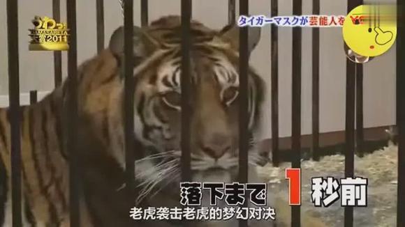日本整蛊:能用老虎整蛊艺人,也只有日本了!