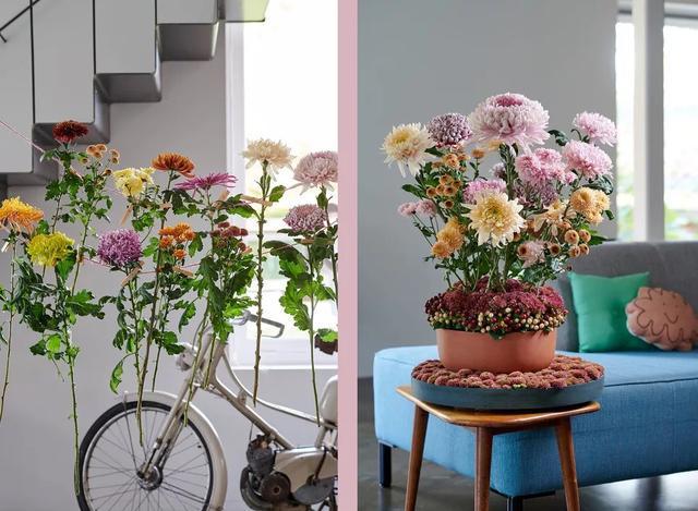 一周花讯:人体花艺成Ins网红;荷兰花卉游行;九月,是菊花的