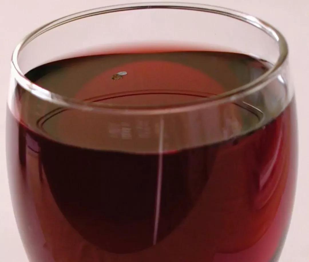 你可能尝不出葡萄酒好坏 但你能尝出果蝇味和瓢虫味儿
