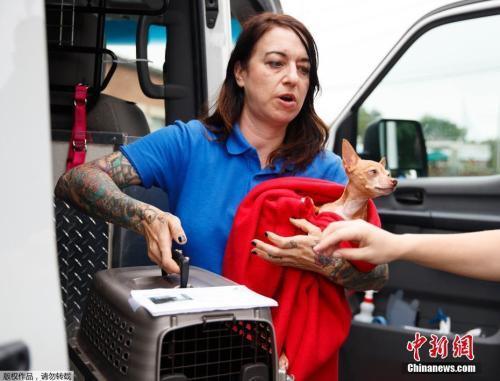 当地时间9月11日,美国弗吉尼亚民众携带宠物撤离受灾区域。