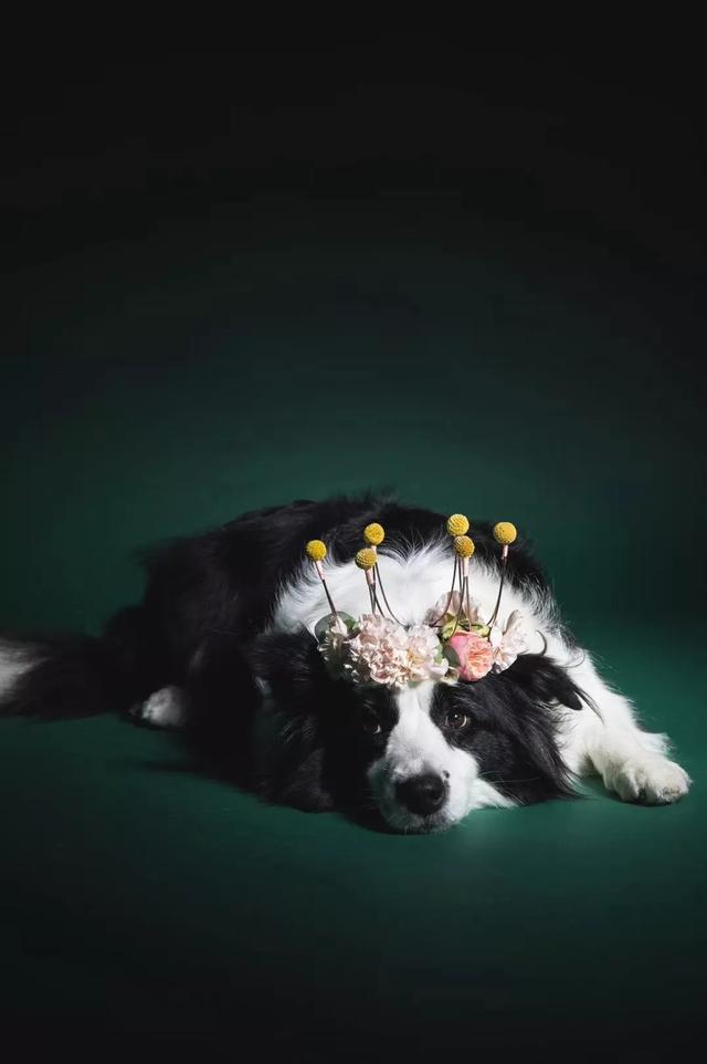 摄影师男友拽我开花店,我负责美他负责拍
