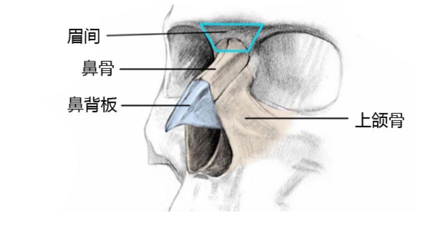 从绘画角度将鼻子解剖结构简化为几何版本,拆分成小的平面,以更好的理