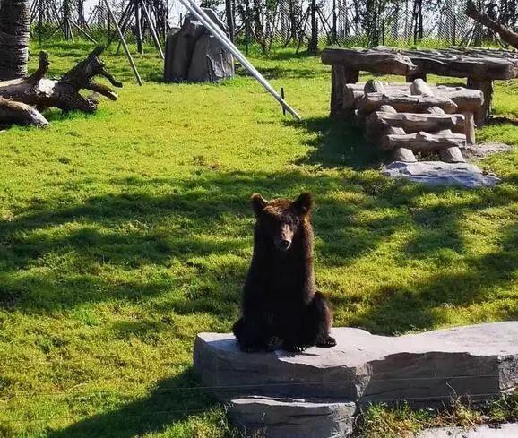 多图直击南通森林野生动物园开业现场!你去了吗?