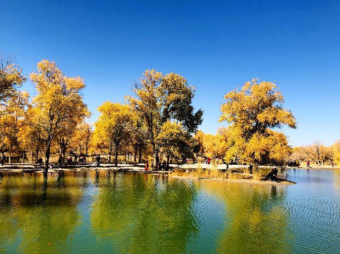 ↑这是10月9日在酒泉市金塔沙漠森林公园拍摄的胡杨林美景。