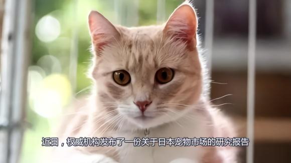 日本宠物市场持续坚挺,高端猫粮市场潜力可期,创业者不可错过